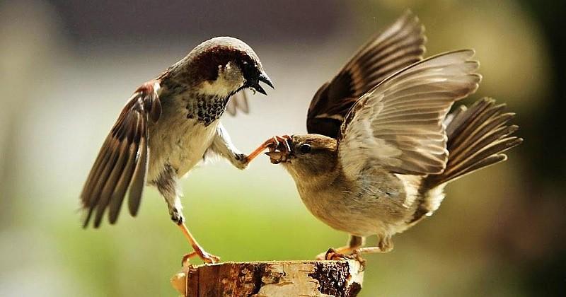 Kuşlarda 'boşanma' oranları arttı